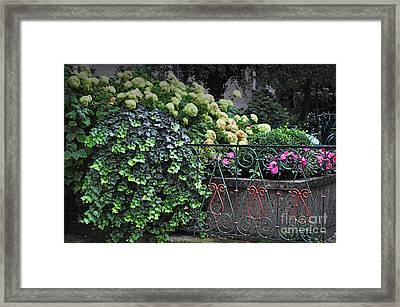 Hydrangeas Salzburg Framed Print by Mary Machare