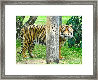 I Can See You.. Framed Print by Joanne Kocwin