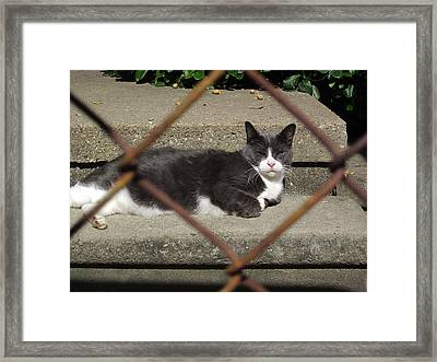 I Know Why The Caged Morty Naps Framed Print by Guy Ricketts