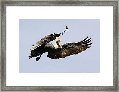 I Put A Spell On You Framed Print by Paulette Thomas