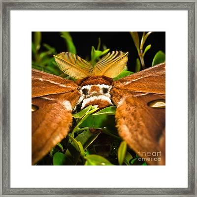 I See You - False Eye Spots Of A Hercules Moth Framed Print by Melle Varoy