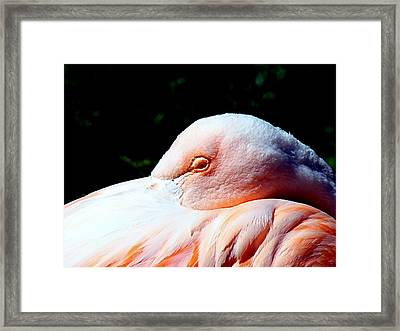 I See You Framed Print by Nick Kloepping