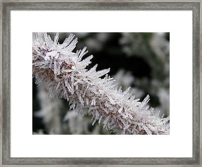 Ice Crystal Formation Along A Twig Framed Print by J McCombie
