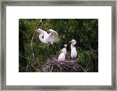 I'll Be Back Framed Print by Paulette Thomas