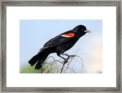 I'm Like A Bird Framed Print by Elizabeth Chevalier