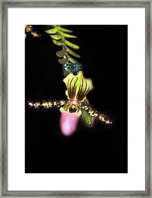 Imag8520 Framed Print by KH Lee