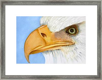 Image 1147b Bold Eagle 1 Framed Print by Wilma Manhardt