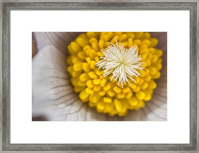 In Close Framed Print by Mike Hendren