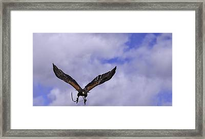 In Coming Framed Print by Richard Lee