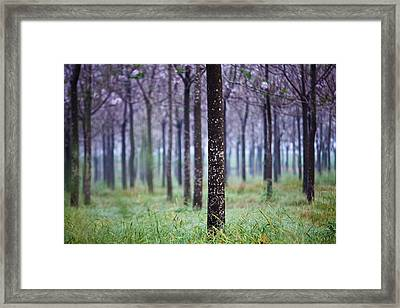 In Front Framed Print by Victor Bezrukov