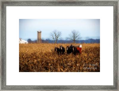 In The Corn 1 Framed Print by David Arment