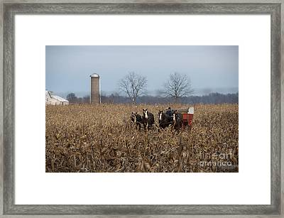 In The Corn 2 Framed Print by David Arment