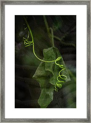 In The Forest Framed Print by Bonnie Bruno