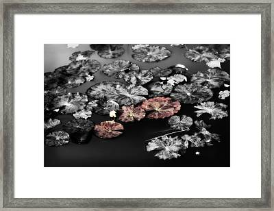 In The Pond Framed Print by Bonnie Bruno