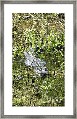 In Waiting Framed Print by Jack Norton