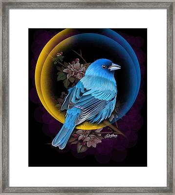 Indigo Bunting Framed Print by Satish Verma