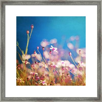 Infatuation In Blue  Framed Print by Amy Tyler