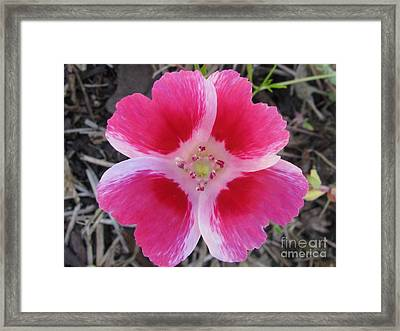 Ingenious Photography Framed Print by Tina Marie