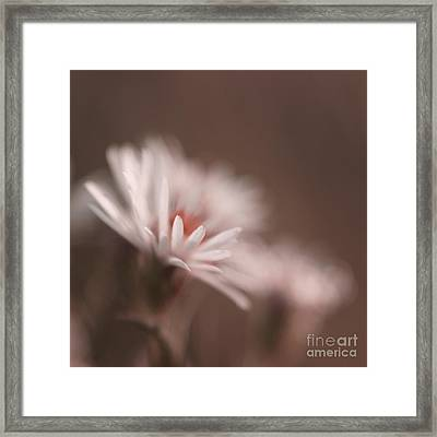 Innocence - 05-01a Framed Print by Variance Collections