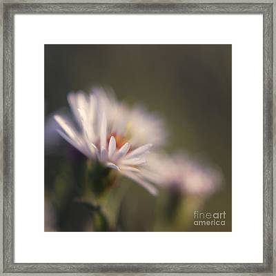 Innocence 02 Framed Print by Variance Collections