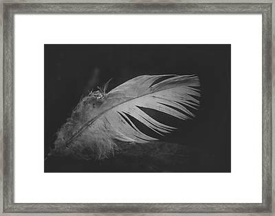 Innocence Lost Framed Print by Odd Jeppesen
