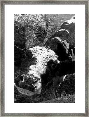 Inquisitive Zoey With Ellamay Framed Print by Danielle Summa