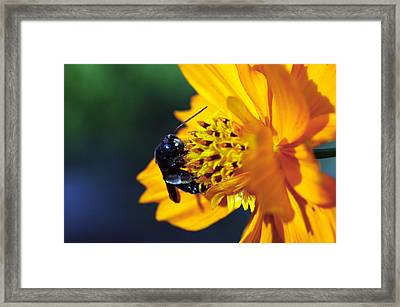 Insect And The Wild One Framed Print by Wanda Brandon