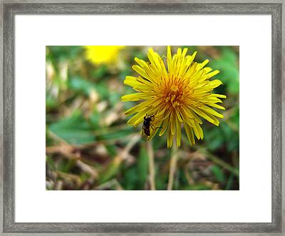 Insect On Flower Framed Print by Alessandro Della Pietra
