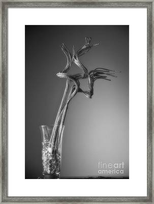Insight Framed Print by Fred Lassmann