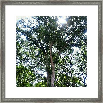 #instadroid #andrography #nexuss #tree Framed Print by Kel Hill