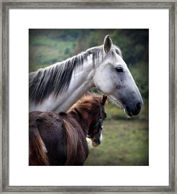 Instinct Of Love Framed Print by Karen Wiles