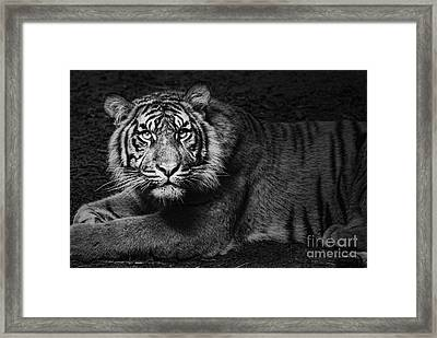 Intent Framed Print by Andrew Paranavitana