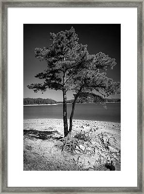 Intertwined Framed Print by M Glisson