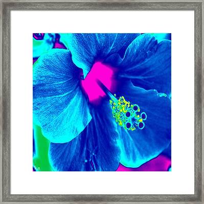 Intimate Blue Framed Print by Keren Shiker