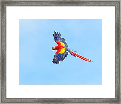 Into The Blue Framed Print by Tony Beck