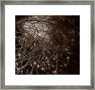 Into The Light Framed Print by Fine Art  Photography