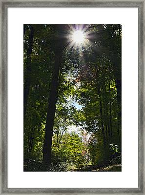 Into The Light Framed Print by Peter Chilelli