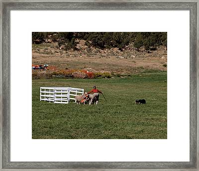 Into The Paddock Framed Print by Joshua House