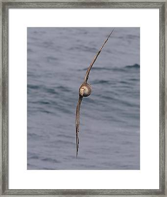 Into The Wind Framed Print by Tony Beck