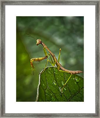Invasion Of The Insect Snatcher Framed Print by Michael Putnam