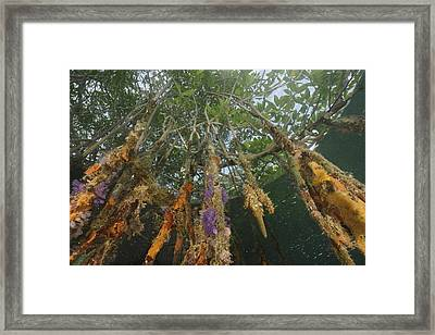 Invertebrate Life Growing On The Roots Framed Print by Tim Laman