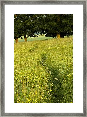 Ireland Trail Through Buttercup Meadow Framed Print by Peter McCabe