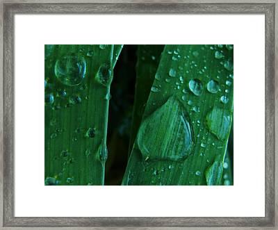 Iris Drops Framed Print by Barbara St Jean