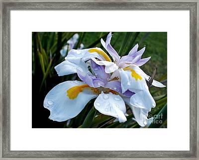 Iris Enjoying The Sunshine Framed Print by Kaye Menner