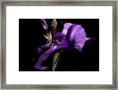 Her Majesty - Gladiola Framed Print by Gilbert Artiaga