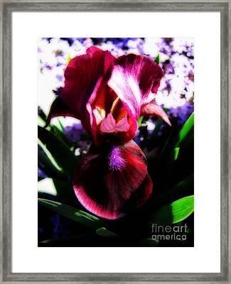Iris Inner Beauty Framed Print by Ms Judi