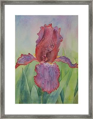 Iris Framed Print by Laurel Thomson