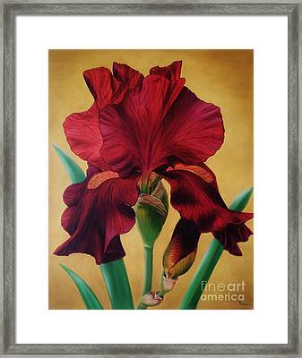 Iris Framed Print by Paula L