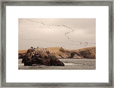 Islas Ballestas - Peru Framed Print by Andrea Cavallini