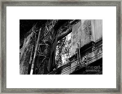It Grows Framed Print by Dean Harte